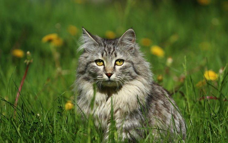 eyes, flowers, grass, cat, muzzle, mustache, look
