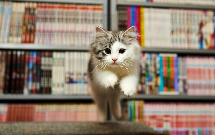 books, kitty, jump, face, fright, library