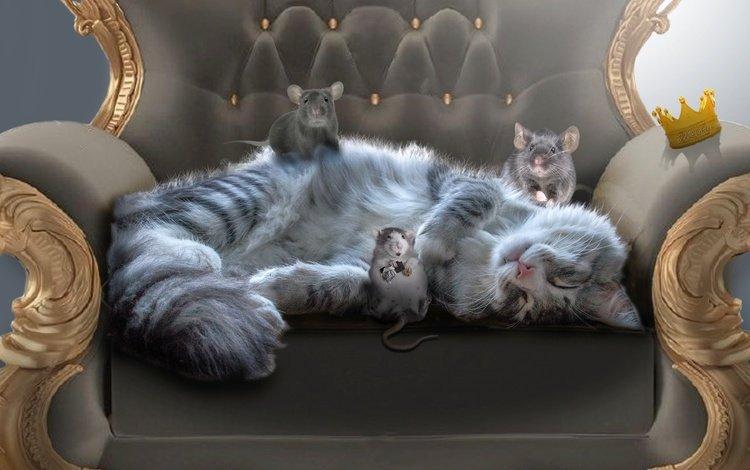 кот, мордочка, усы, кошка, кресло, мышки, крысы, cat, muzzle, mustache, chair, mouse, rats