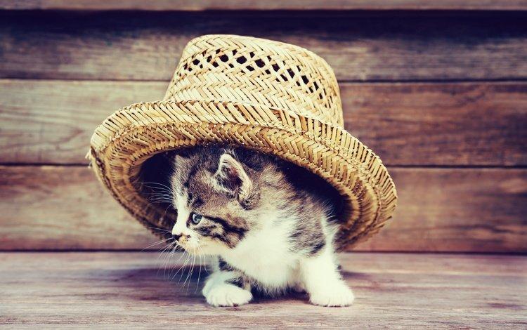 кот, мордочка, усы, кошка, взгляд, котенок, шляпа, cat, muzzle, mustache, look, kitty, hat