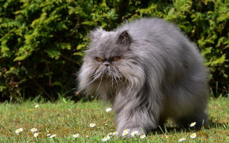 flowers, grass, cat, muzzle, mustache, look, fluffy