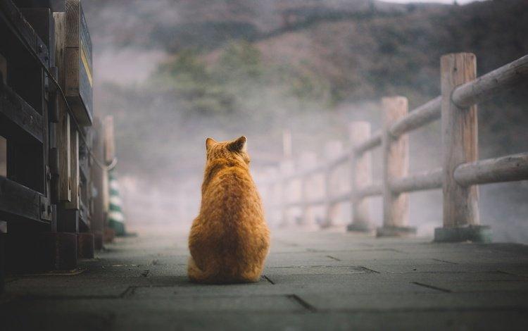 cat, sitting, red