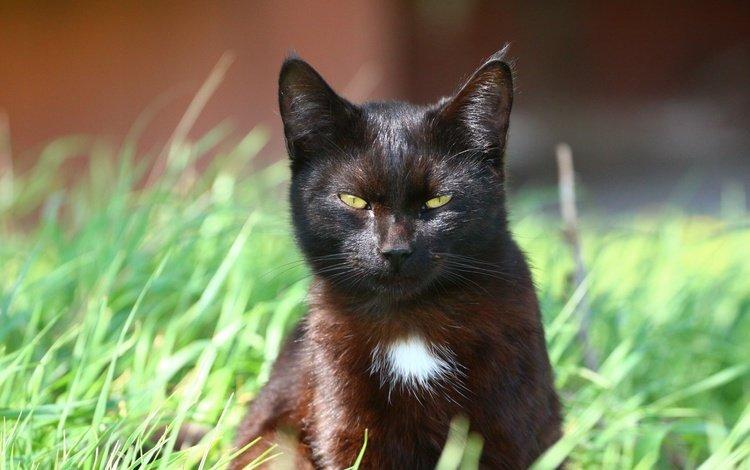 кот, мордочка, усы, кошка, взгляд, травка, cat, muzzle, mustache, look, weed
