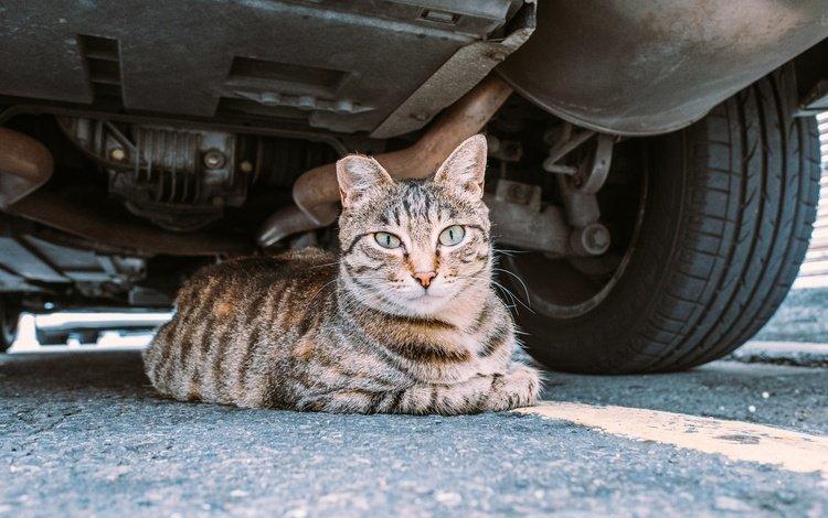 кот, мордочка, усы, кошка, взгляд, укрытие, cat, muzzle, mustache, look, shelter