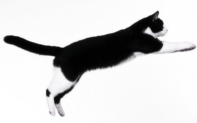 кот, мордочка, усы, кошка, взгляд, прыжок, cat, muzzle, mustache, look, jump