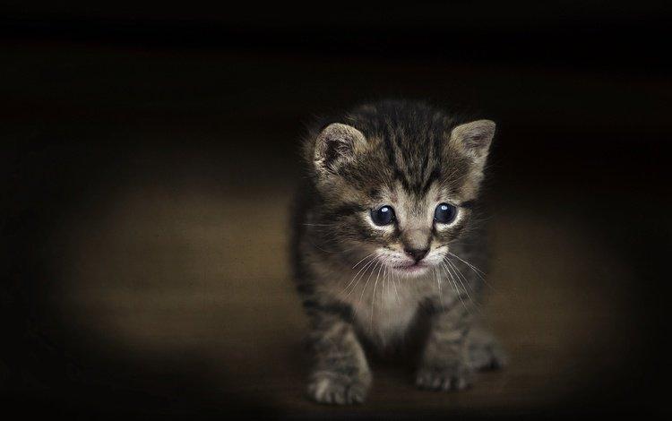 кот, мордочка, усы, кошка, взгляд, котенок, темный фон, малыш, cat, muzzle, mustache, look, kitty, the dark background, baby