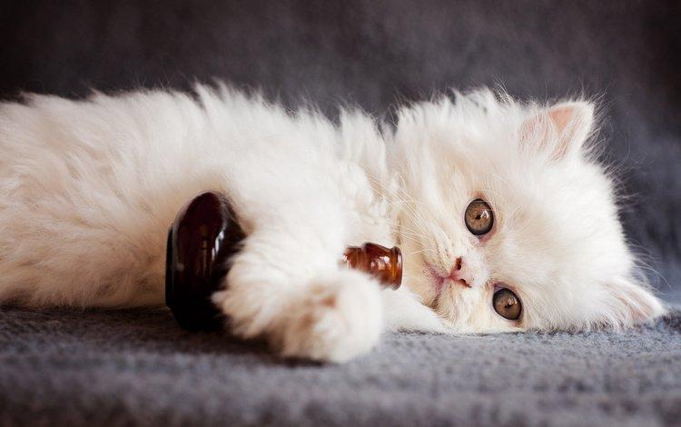 кот, мордочка, кошка, взгляд, котенок, животное, детеныш, бутылочка, cat, muzzle, look, kitty, animal, cub, bottle