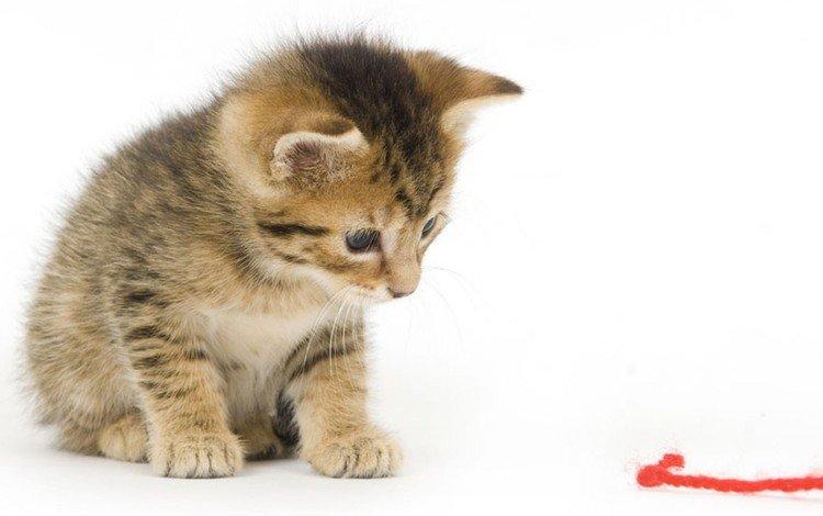 cat, muzzle, mustache, look, kitty, thread
