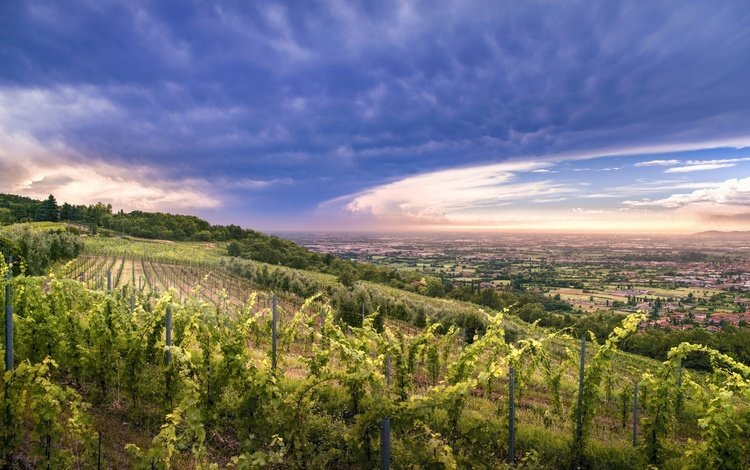 the sky, clouds, hills, nature, sunset, valley, vineyard