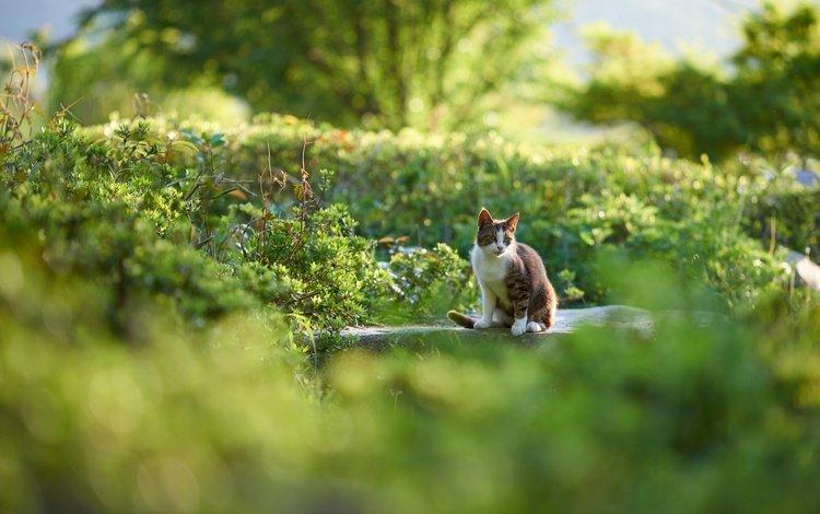 природа, зелень, кот, мордочка, кошка, взгляд, nature, greens, cat, muzzle, look