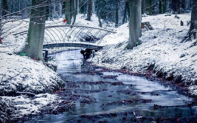 trees, water, snow, winter, park, trunks, bridge, cold, netherlands, guelders, velp