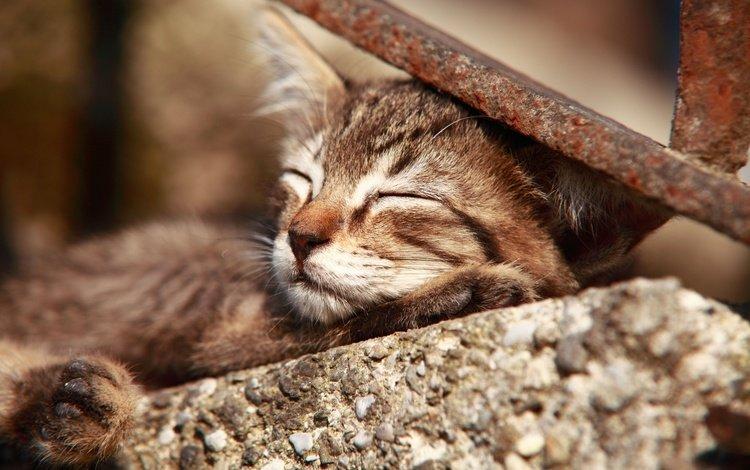 cat, muzzle, mustache, sleep, kitty
