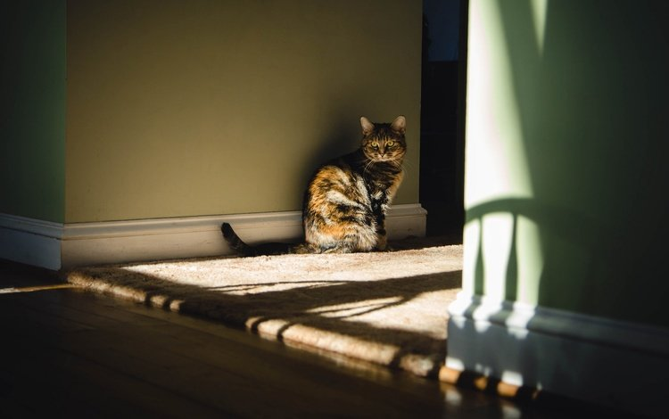 light, cat, look, house, room, sitting, floor, wall, shadows, mat