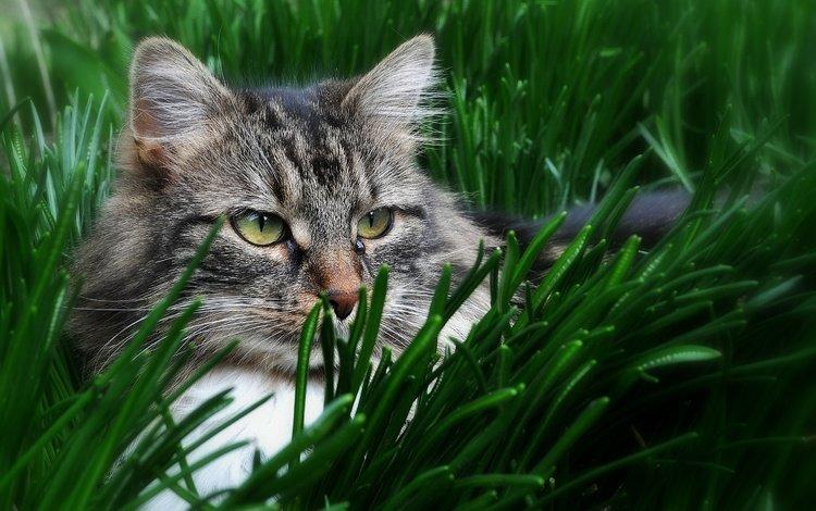 eyes, grass, cat, look