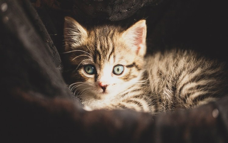 кот, мордочка, усы, кошка, взгляд, котенок, малыш, cat, muzzle, mustache, look, kitty, baby