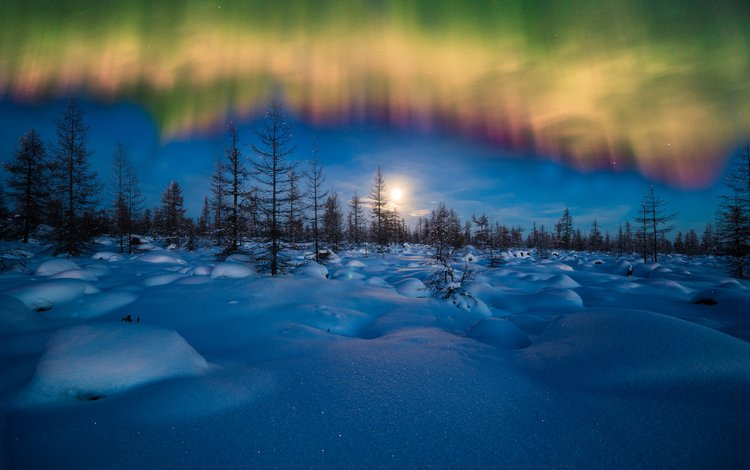 небо, ночь, снег, лес, зима, пейзаж, северное сияние, the sky, night, snow, forest, winter, landscape, northern lights