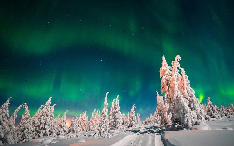 небо, деревья, снег, лес, зима, северное сияние, ели, the sky, trees, snow, forest, winter, northern lights, ate