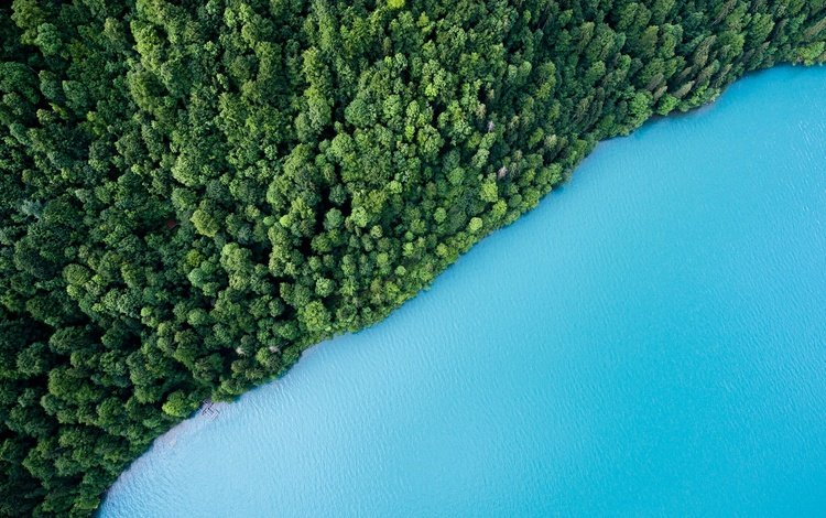 деревья, вода, озеро, зелень, лес, вид сверху, trees, water, lake, greens, forest, the view from the top