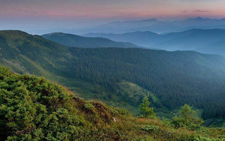 трава, горы, растения, лес, карпаты, grass, mountains, plants, forest, carpathians