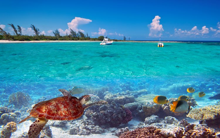 природа, море, яхты, остров, тропики, 13, nature, sea, yachts, island, tropics
