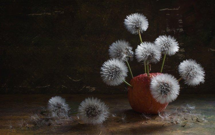 цветы, цветение, фон, фрукты, яблоко, одуванчики, плоды, пушинки, flowers, flowering, background, fruit, apple, dandelions, fuzzes