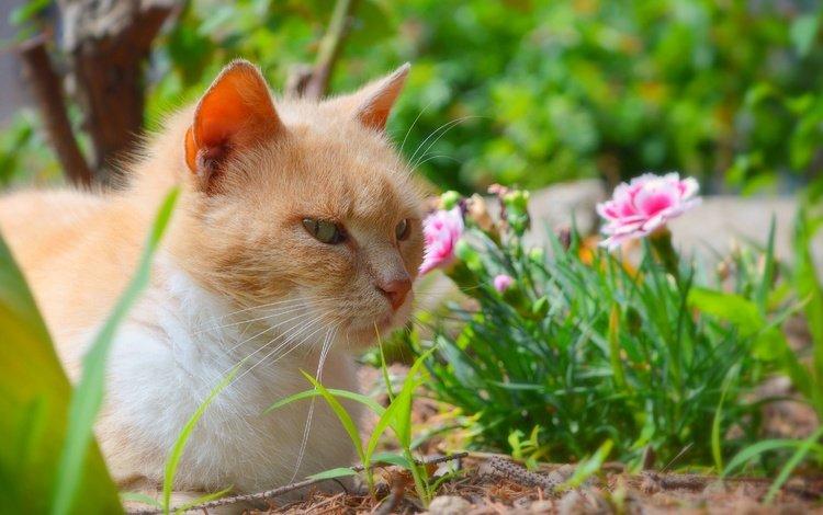 цветы, трава, кот, мордочка, усы, кошка, взгляд, flowers, grass, cat, muzzle, mustache, look