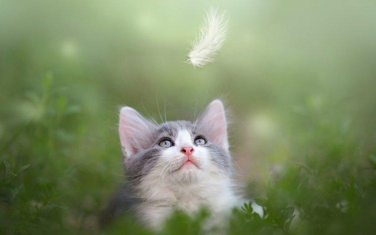 природа, животное, зелень, перо, листья, кот, мордочка, усы, кошка, взгляд, котенок, kitty, nature, animal, greens, pen, leaves, cat, muzzle, mustache, look