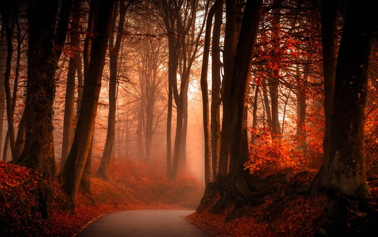 свет, дорога, деревья, лес, туман, стволы, осень, поворот, light, road, trees, forest, fog, trunks, autumn, turn