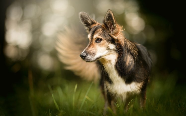 трава, мордочка, взгляд, собака, боке, grass, muzzle, look, dog, bokeh