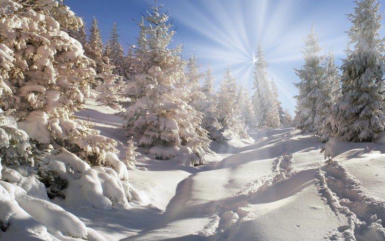 небо, деревья, снег, природа, лес, зима, the sky, trees, snow, nature, forest, winter