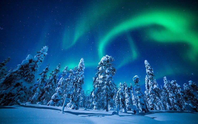 небо, деревья, снег, природа, лес, зима, пейзаж, северное сияние, the sky, trees, snow, nature, forest, winter, landscape, northern lights