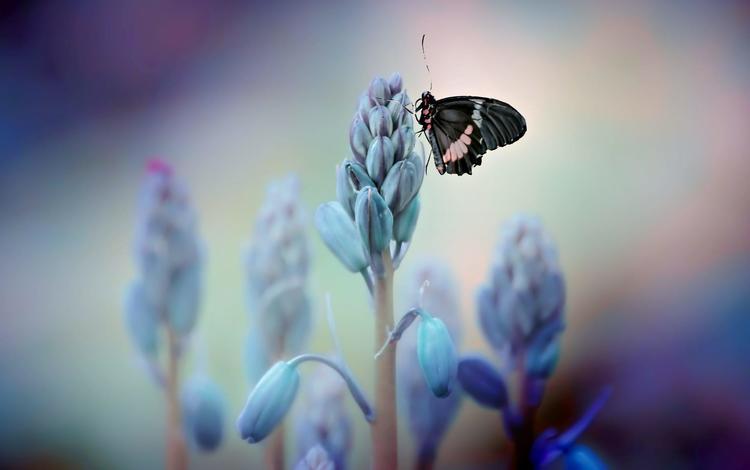 цветы, насекомое, бабочка, крылья, vinny rojas, flowers, insect, butterfly, wings