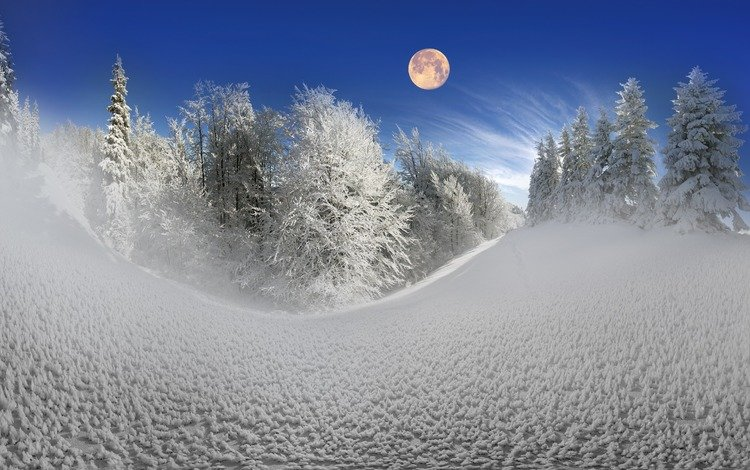 небо, деревья, снег, природа, лес, зима, луна, сугробы, the sky, trees, snow, nature, forest, winter, the moon, the snow