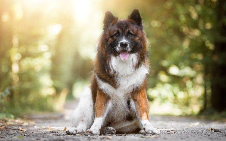 muzzle, look, dog, language, birgit chytracek