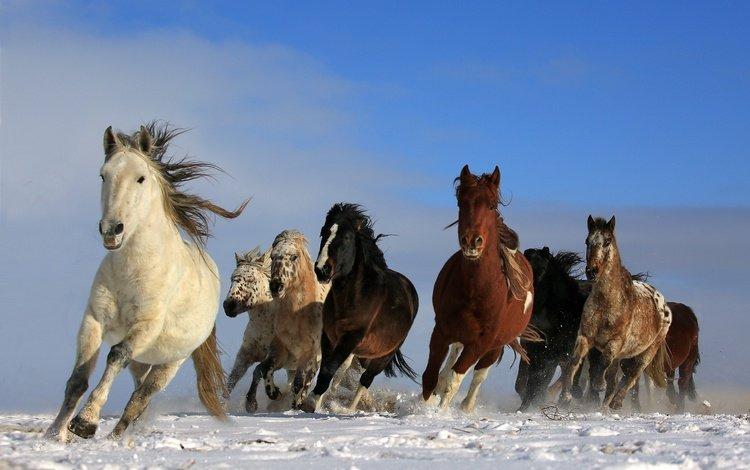 небо, снег, природа, животные, лошади, кони, грива, бег, the sky, snow, nature, animals, horse, horses, mane, running