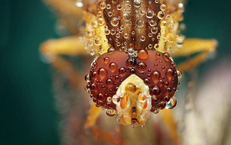 eyes, macro, insect, drops, fly, ondrej pakan