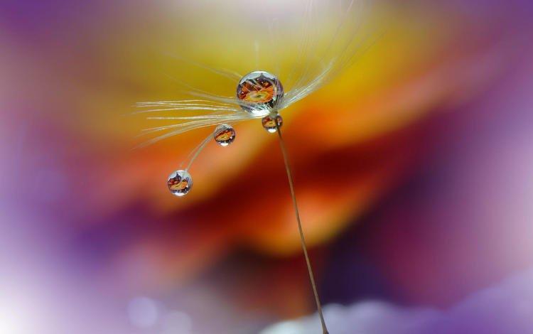 drops, blur, fluff, blade of grass, juliana nan, purple rain