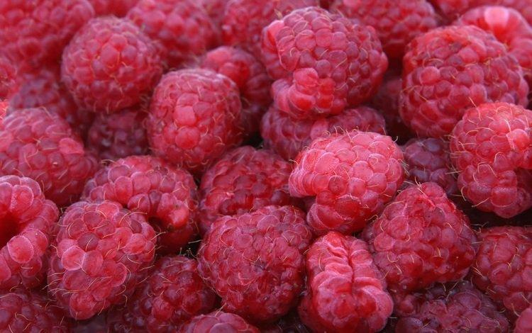 малина, лето, ягоды, много, raspberry, summer, berries, a lot