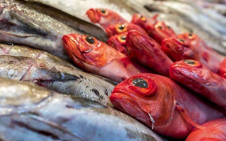 food, fish, shop, seafood