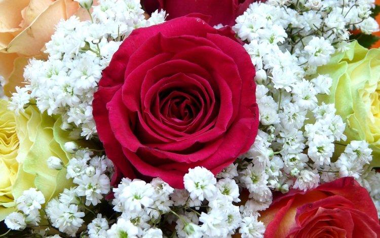 цветы, бутоны, розы, красные, жемчужница, тысячелистник птармика, flowers, buds, roses, red, oyster, yarrow of ptarmica