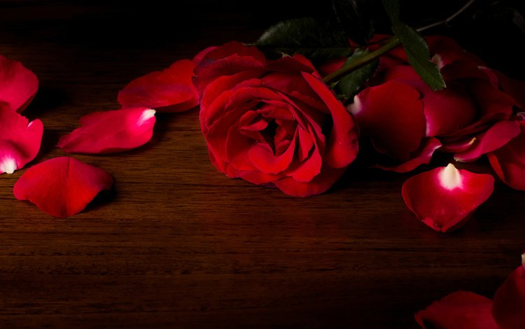 flower, rose, petals, red, wooden surface