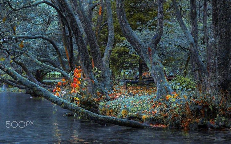 деревья, река, природа, парк, стволы, забор, скамейка, mevludin sejmenovic, trees, river, nature, park, trunks, the fence, bench