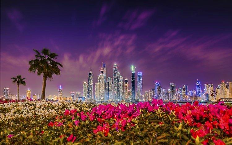 цветы, оаэ, ночь, закат, город, небоскребы, пальмы, здания, дубай, flowers, uae, night, sunset, the city, skyscrapers, palm trees, building, dubai