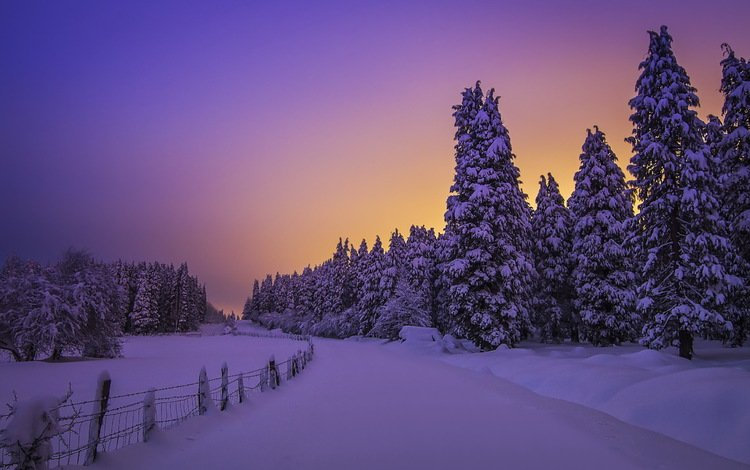 the sky, night, trees, snow, forest, winter, landscape, frost, the fence, twilight