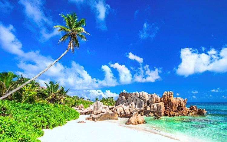 the sky, clouds, nature, shore, sea, sand, beach, palm trees, tropics