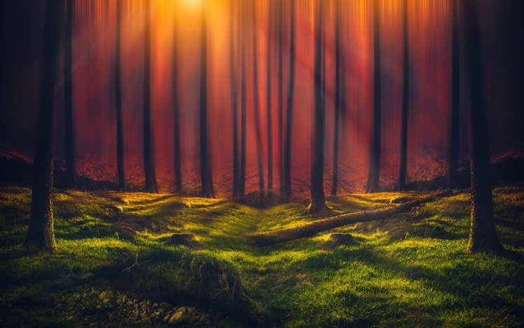 деревья, зелень, лес, стволы, солнечные лучи, trees, greens, forest, trunks, the sun's rays