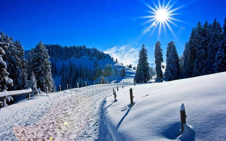 the sky, road, trees, the sun, snow, nature, winter, pine, traces, the snow, sunny day