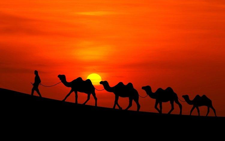 the sun, sunset, desert, people, caravan, camels