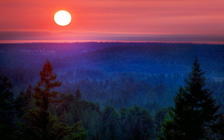 ночь, лес, закат, пейзаж, гора, луна, night, forest, sunset, landscape, mountain, the moon