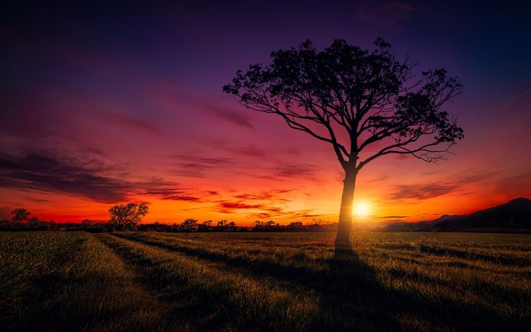 the sky, road, clouds, the sun, tree, sunset, field
